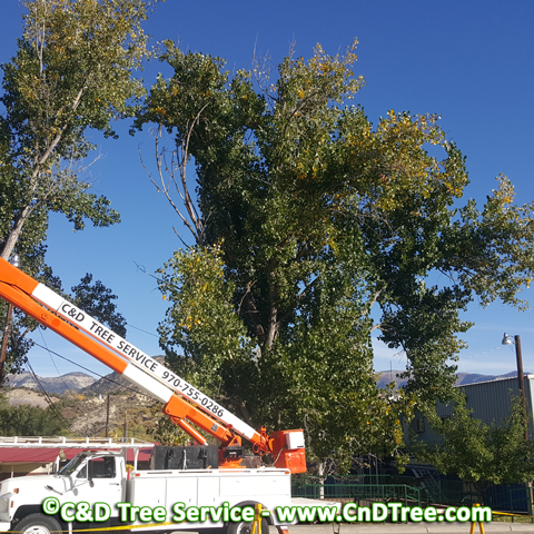 C & D Tree Service truck with boom for trimming trees