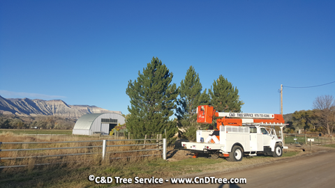 C&D Tree services Mesa County and surrounding areas in Colorado